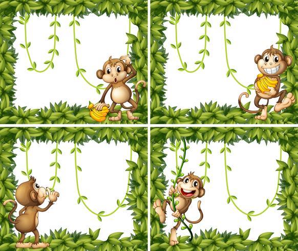 Frame design with monkeys and vine