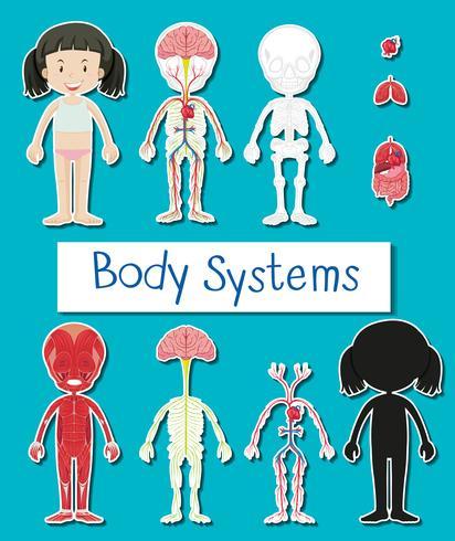 Diagramm, das verschiedene Körpersysteme des menschlichen Mädchens zeigt