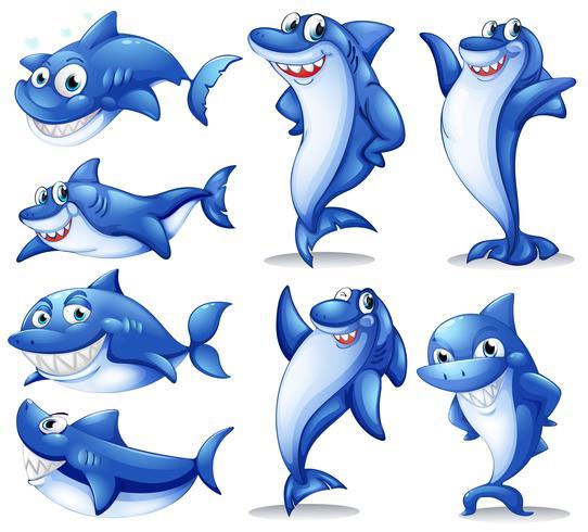 Shark i olika positioner vektor
