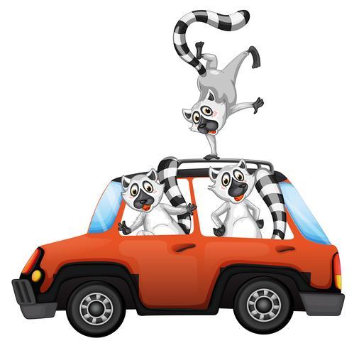 Lémurien dans une voiture sur backgroubd blanc