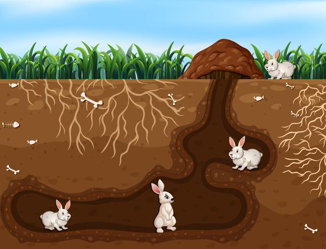 Famiglia di conigli che vivono nel buco