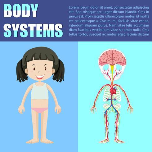 Körpersystemdiagramm des Mädchens