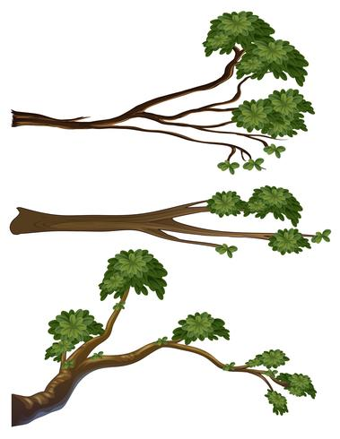 Different shapes of branches vector