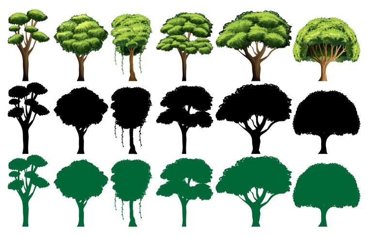Conjunto de diferentes arboles