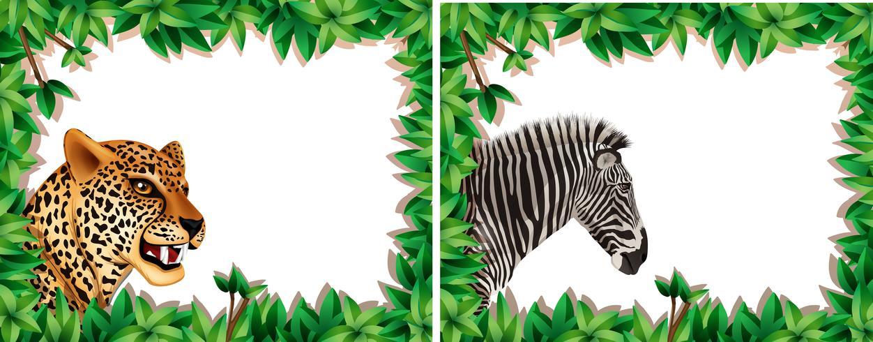 Zebra und Leopard auf Naturrahmen