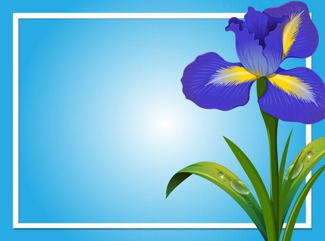 Gränsmall med blå iris