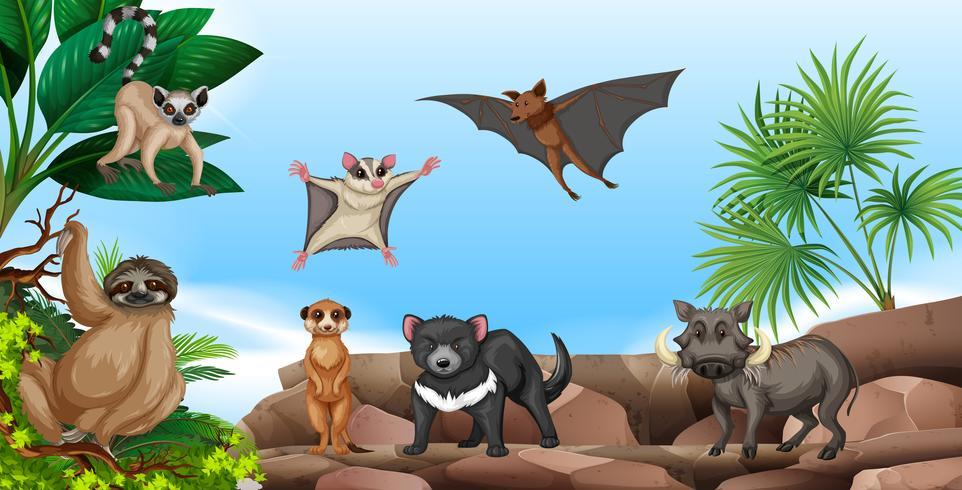Animales salvajes en la montaña
