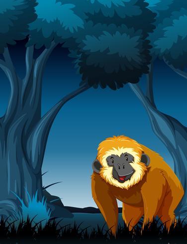 Affe auf Nachtwald