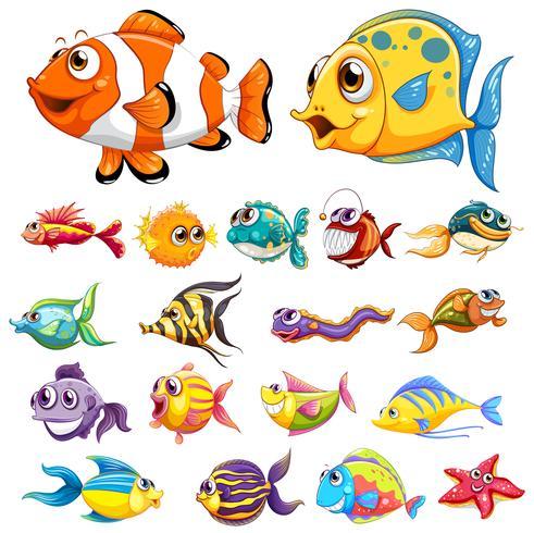 Olika typer av fisk