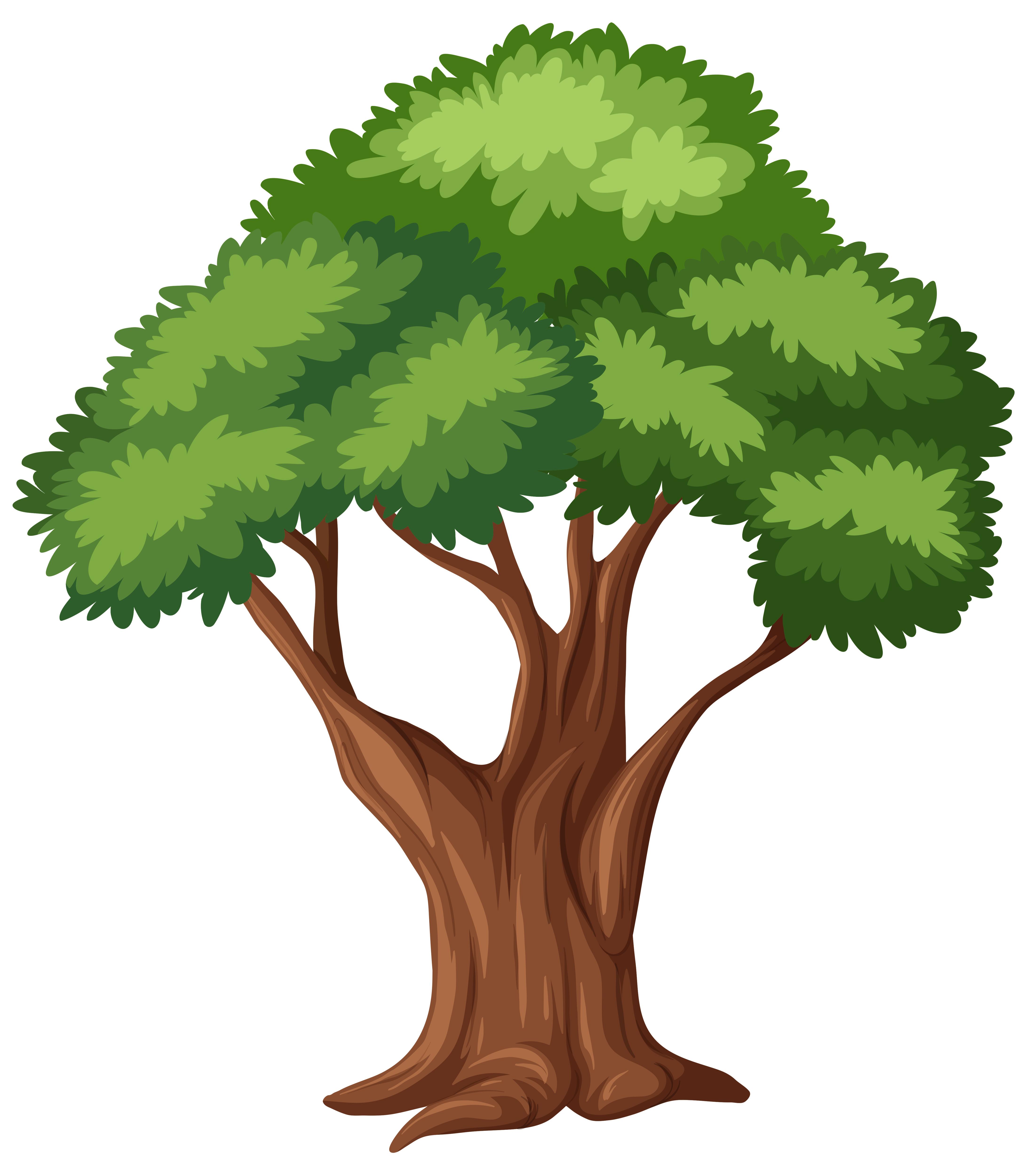 Vector Illustration Tree: Isolated Tree On White Background