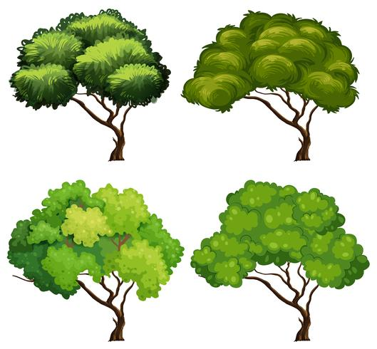 Quattro tipi di alberi vettore