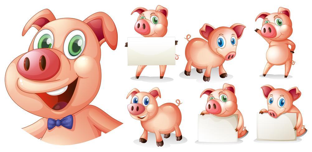 Cerdos en diferentes posiciones.