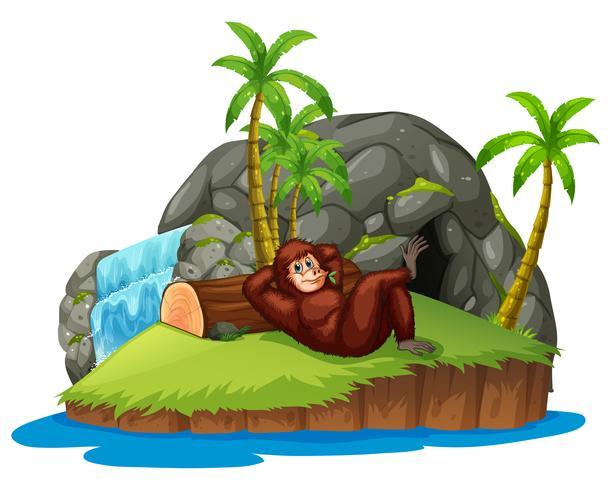 Mono en la isla