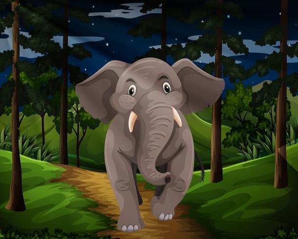 Grå elefant som går i skogen på natten