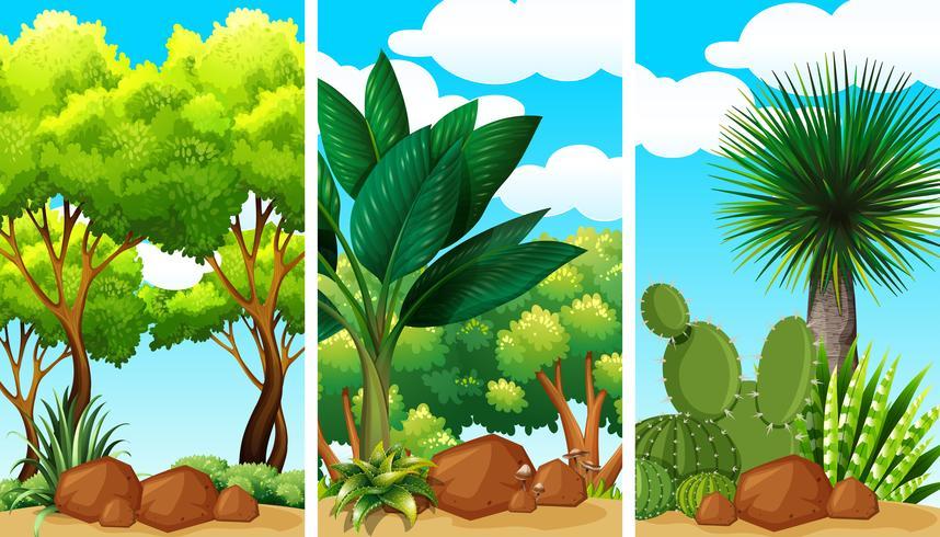 Trädgårds scener med växter och stenar