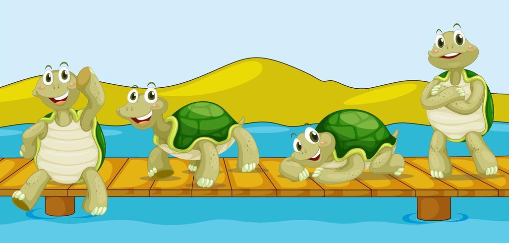 Four turtles on wooden bridge