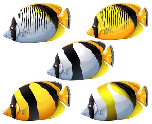 Vijf kleurrijke vissen