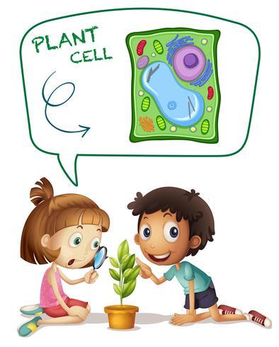 Niños mirando células de la planta en una hoja