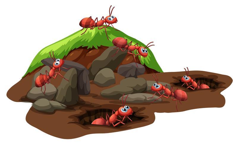 Grupo de hormigas viviendo bajo tierra.