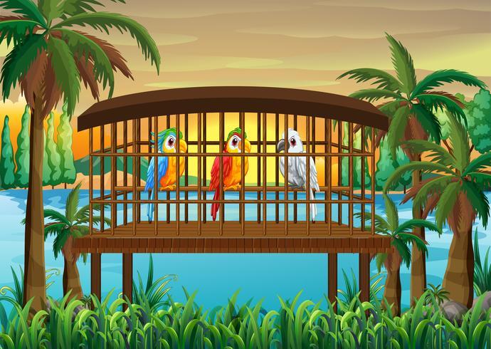 Drei Macawpapageienvögel im hölzernen Käfig