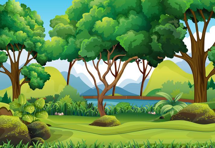 Cena de floresta com rio e árvores