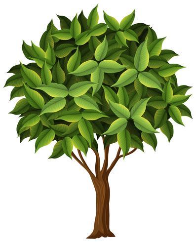 Un albero di natura su sfondo bianco vettore