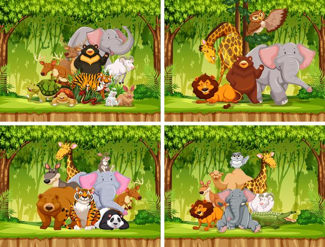 Sats av vilddjur i naturen