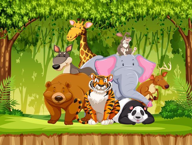 Set dieren in het wild