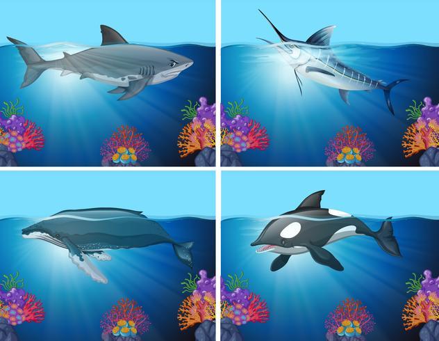 Tiburones y ballenas en el océano vector