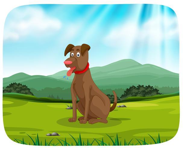 Un perro en el parque