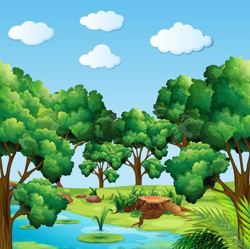 Skogsplats med många träd och flod