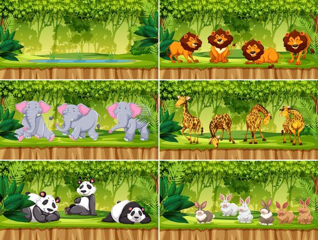Ensemble de scènes avec des animaux