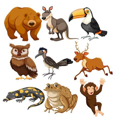 Sats av olika djur