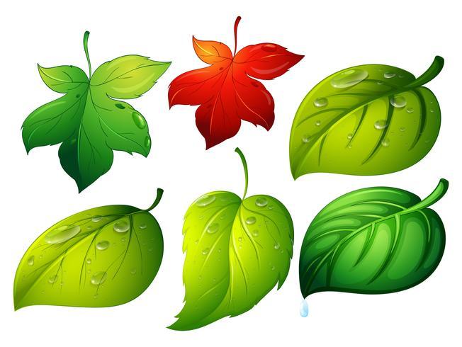 Olika typer av gröna blad
