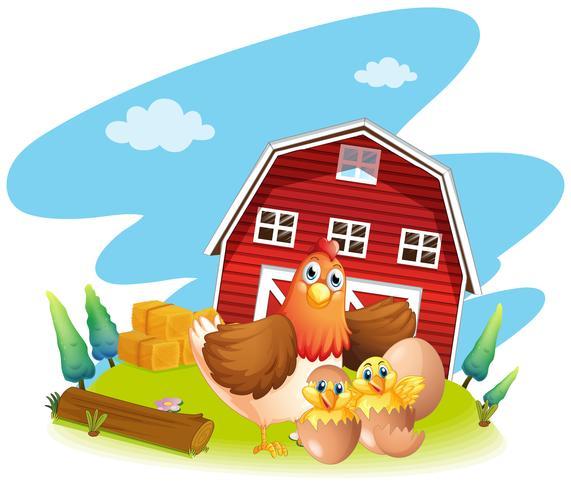 Kyckling och kycklingar på gården