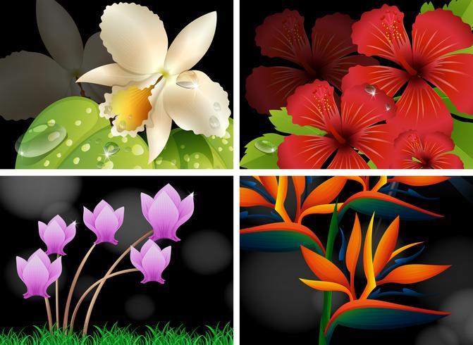 Diferentes tipos de flores con fondo negro. vector
