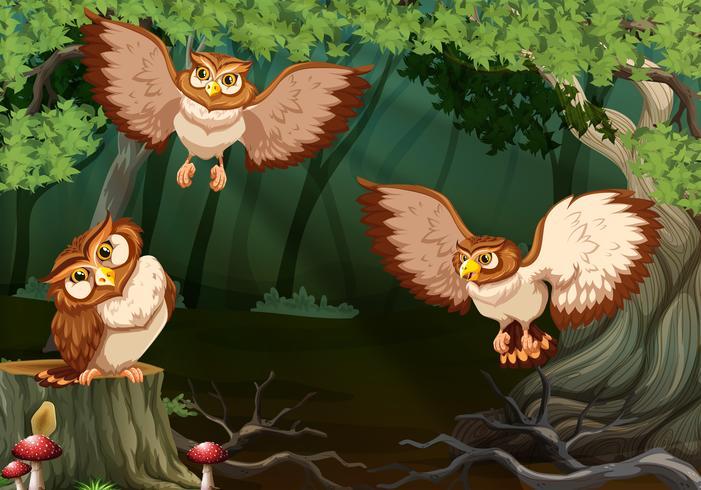 Drei Eulen, die in Wald fliegen