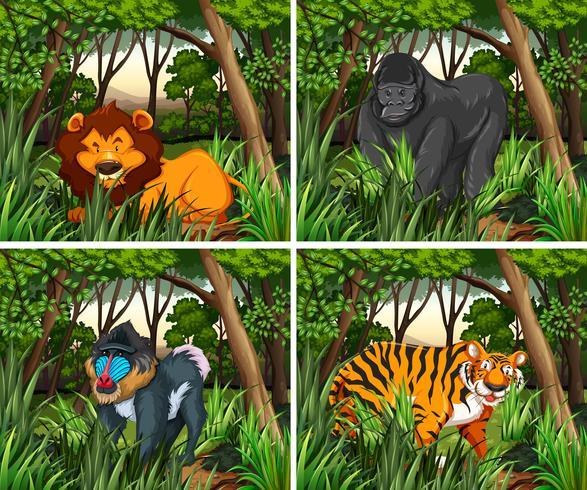 Wid dieren leven in het bos vector