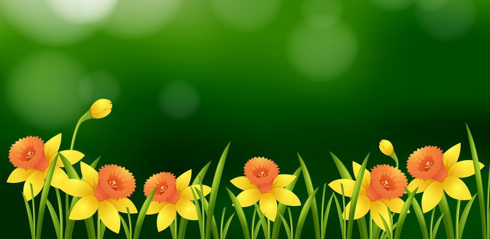 Progettazione del fondo con i fiori gialli in giardino