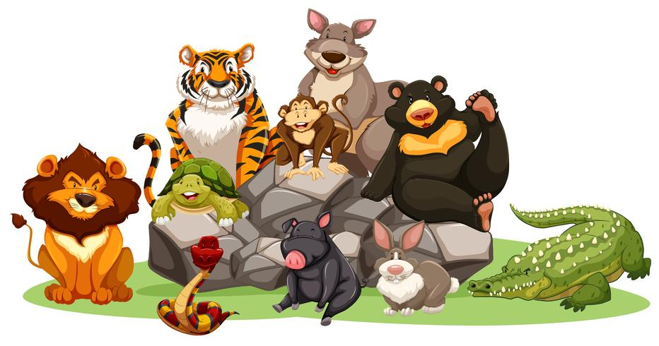 Diversi tipi di animali selvatici sulla roccia vettore
