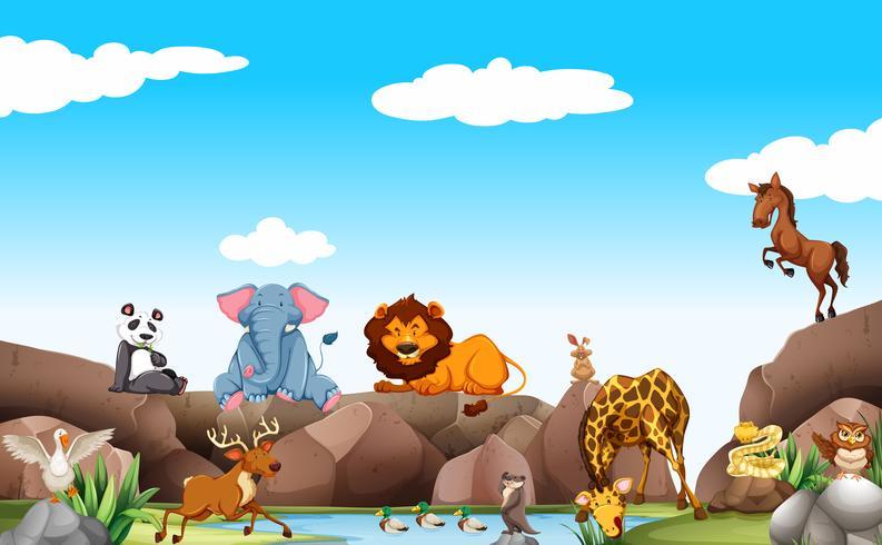 Escena con animales salvajes junto al estanque.