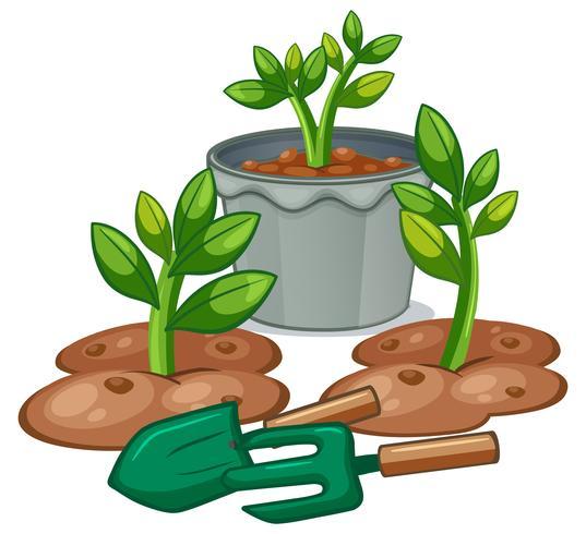 Plantas y equipos de jardinería.