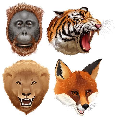 Quatre visages d'animaux sauvages vecteur