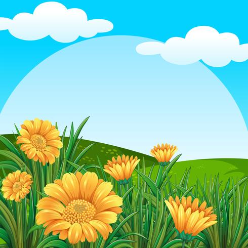 Background scene with yellow flowers in field