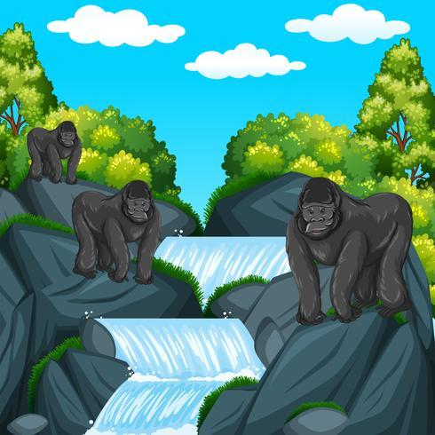 Tre gorillor vid vattenfallet