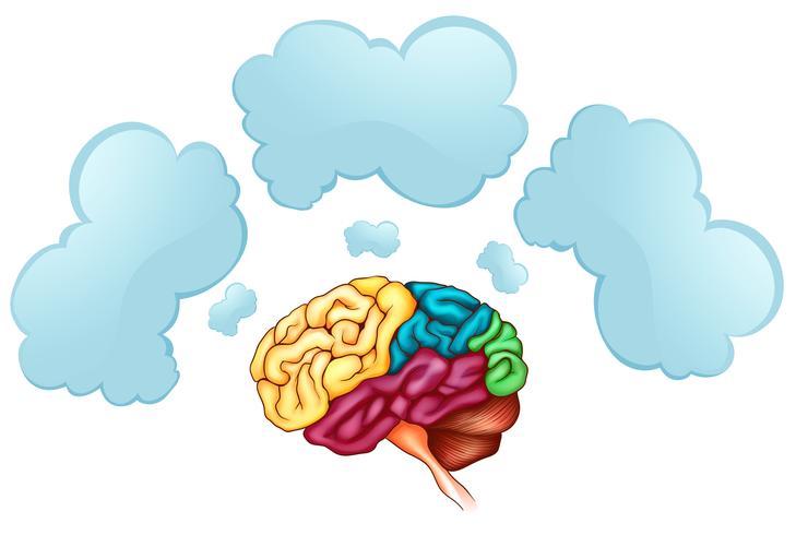 Menschliches Gehirn und drei Blasen