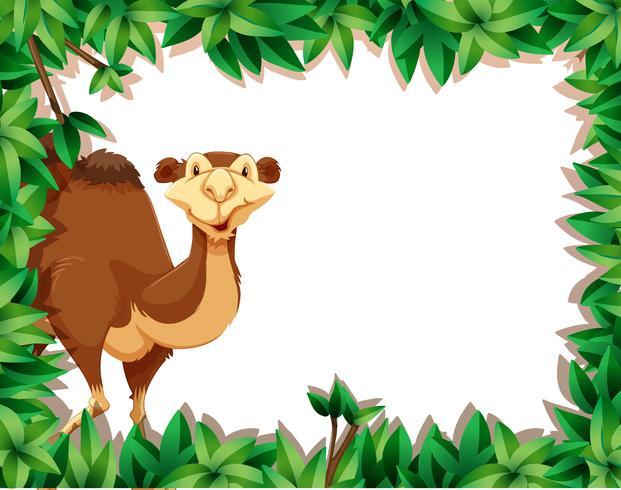 Un cammello sulla cornice della natura