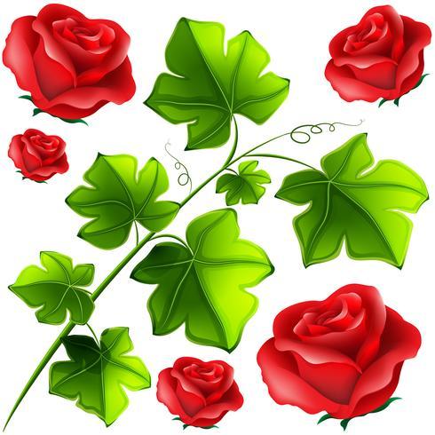 Grüne Blätter und rote Rosen