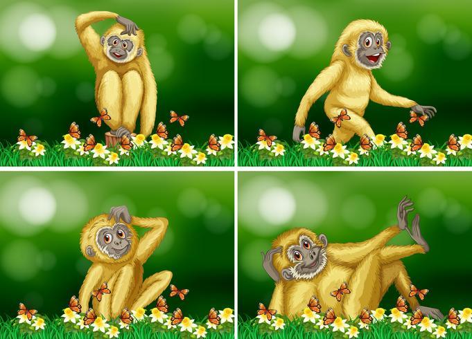 Cute gibbon in four scenes