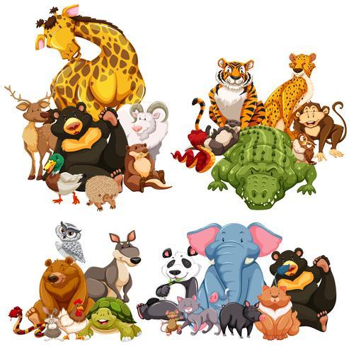 Vier groep wilde dieren